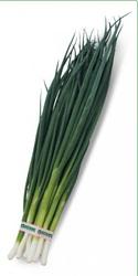 Cемена Китано. Предлагаем купить семена лука на перо ВУЛКАН