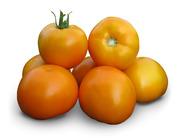 Семена Китано. Предлагаем купить  cемена желтого томата KS 17 F1