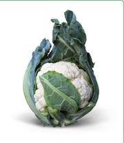 Cемена Китано. Предлагаем купить семена цветной капусты МИСОРА F1